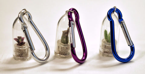 Mini terrarium plants with clips selection
