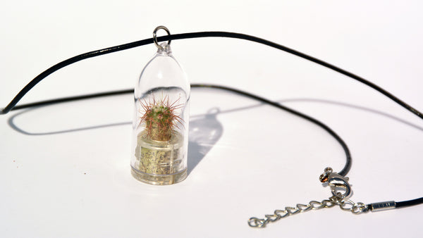 Palms Live Necklace - Terrarium Cowhide Live Necklace plant