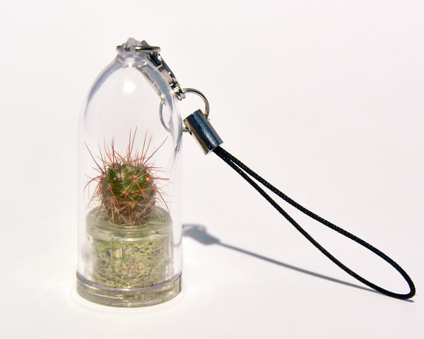 Palms Live Necklace - Tiny Terrarium Living Plant. BooBoo Plant