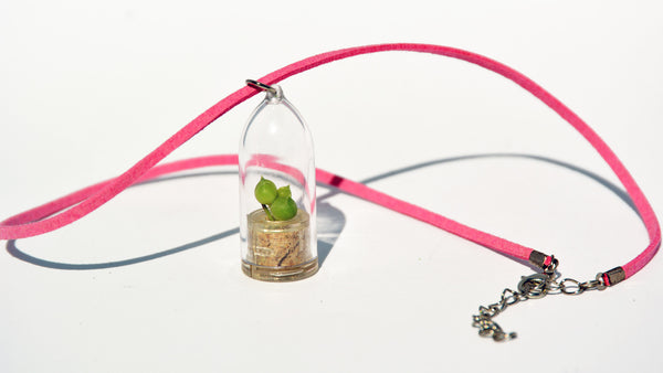 Pearls Live Necklace Plant - Terrarium Suede Pink Necklace plant BooBoo Plant.