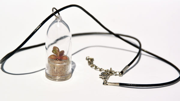 Pinky Rose Live Plant Necklace - Terrarium Leather Cowhide Necklace Living Plant BooBoo Plant.