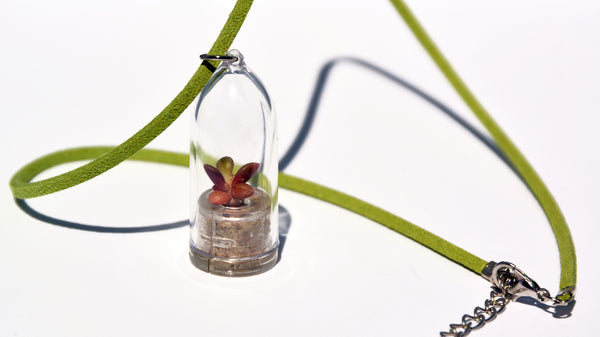 Pinky Rose Live Plant Necklace - Terrarium Suede Green Living Plant BooBoo Plant.