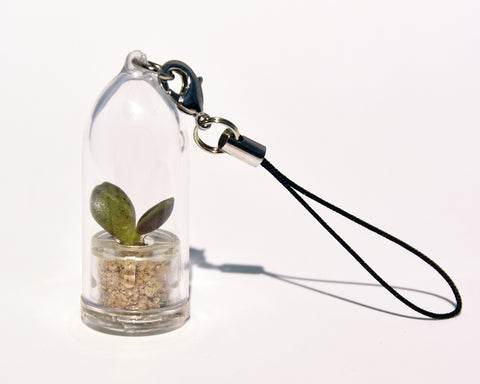 Wings Live Necklace Plant - Terrarium Plant Necklace BooBoo Plant