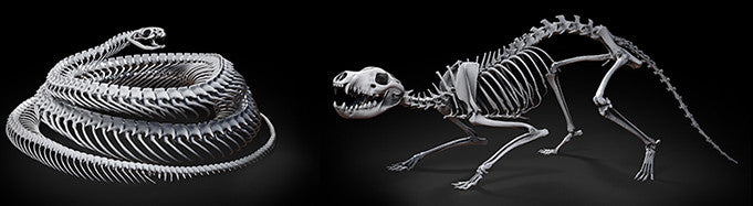 Skeletal Collection