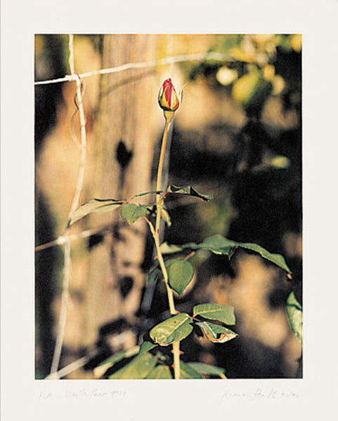 Thomas Struth, Rose, Winterthur, 1991, 1996 - Lougher Contemporary