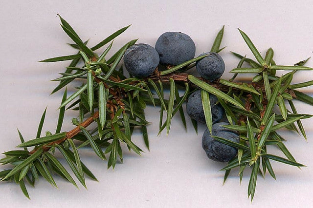 Juniper Berries Whole (1kg)