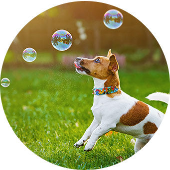 Peanut Butter Scented Dog Bubbles - Bubble Inc