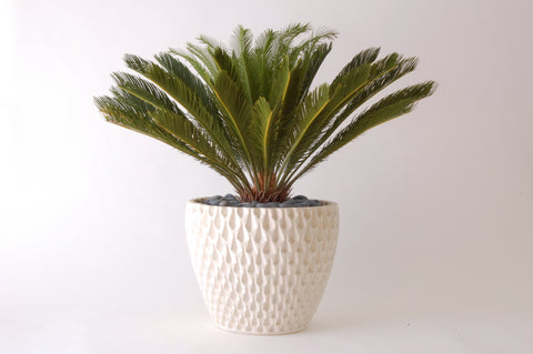 Architectural Pottery AP-100 Pineapple Planter/Container