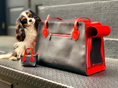 What you need in a pet carrier
