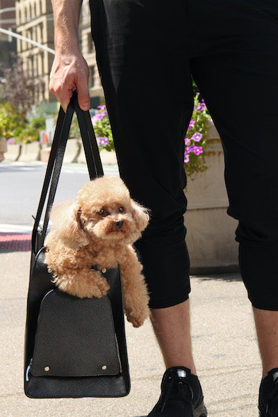 Airline approved pet carrier from Shaya Pets