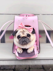 Pug Lou Lou in Blush Pet Carrier
