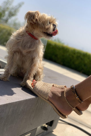 Dog collar that can also be worn as an anklet.