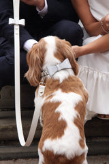 Leather dog leash and collar for weddings. White leather dog collar.