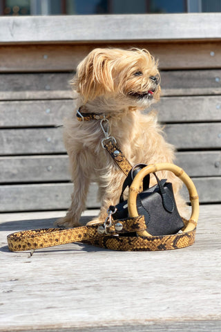 Celeb loved dog leash with matching mini handbag poop bag holder.
