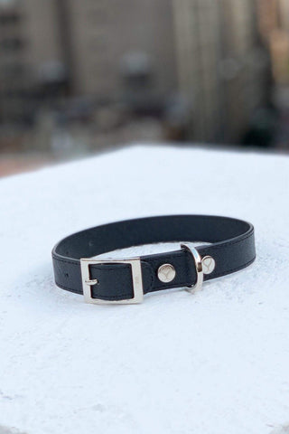 Shaya Pets Taylor Collar in Vegan Canvas.