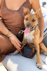 Luxury vegan pet accessories. Leashes, collars and dog bags made with vegan materials.