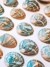 Load image into Gallery viewer, Abalone Shell ~ Small