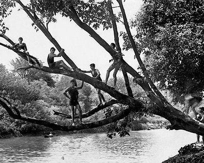 Boys in Trees photograph