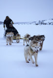 Dog Sled photograph