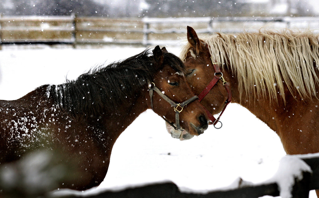 Horses Staying Warm