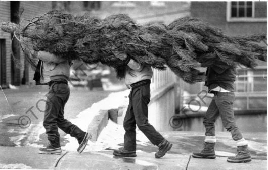 Carrying a Christmas Tree photograph