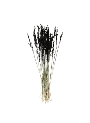 Dried Flower - Black Triticum Aestivum