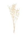 Dried Flower - Eryngium