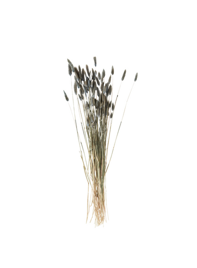 Dried Flower - Lagurus Grey