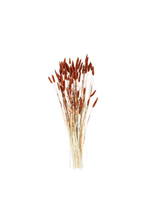 Dried Flower - Lagurus Orange