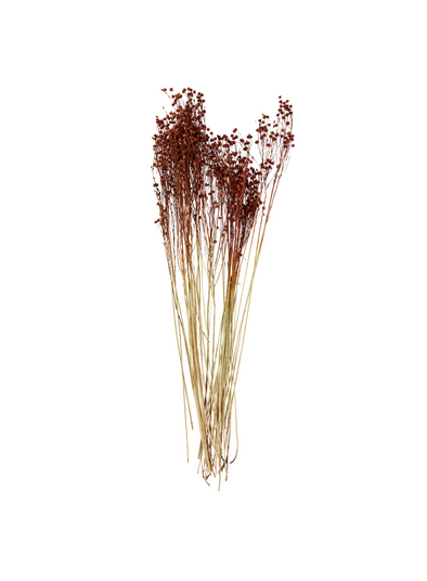 Dried Flower -  Orange Linum