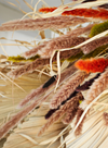 Dried Flower - Orange Miscanthus Floridulus