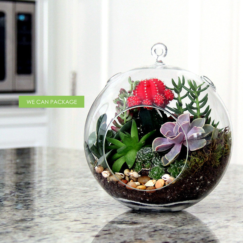 6 5 Inch Hanging Glass Orbs For Diy Terrarium Ideas