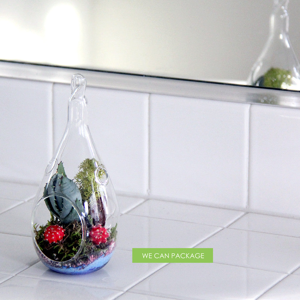 Terrarium Mini Terrarium Glass Terrarium Terrarium How To