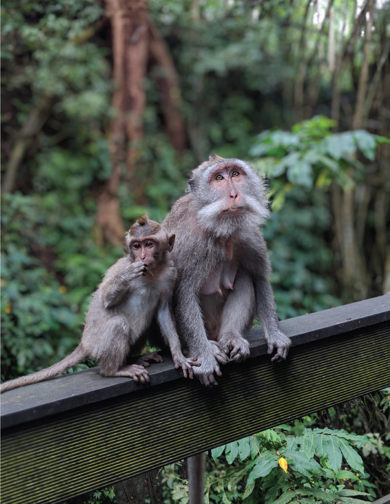 A Pair in the Monkey Forest, Ubud, Bali, by Distil Union