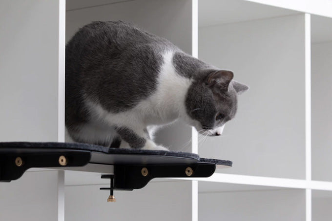 Kickstarter - CATSSUP cat shelving furniture system