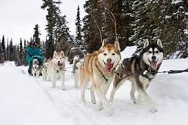 3rd Grade Iditarod- Subscription & Memberships