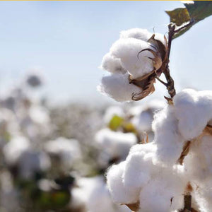 Organic Cotton.. Facts, myths and FAQs