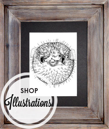 Shop Illustrations
