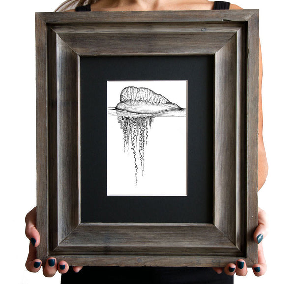 Portuguese Man-Of-War, Framed