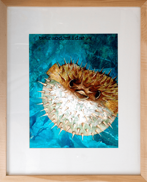 Tetraodontidae, Pufferfish Art Print
