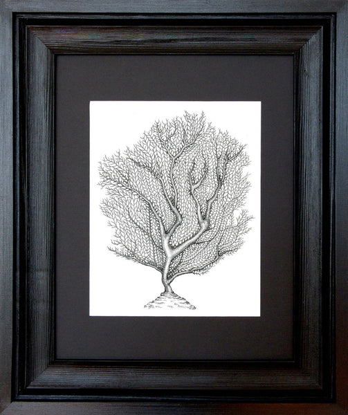 Sea Fan, Framed
