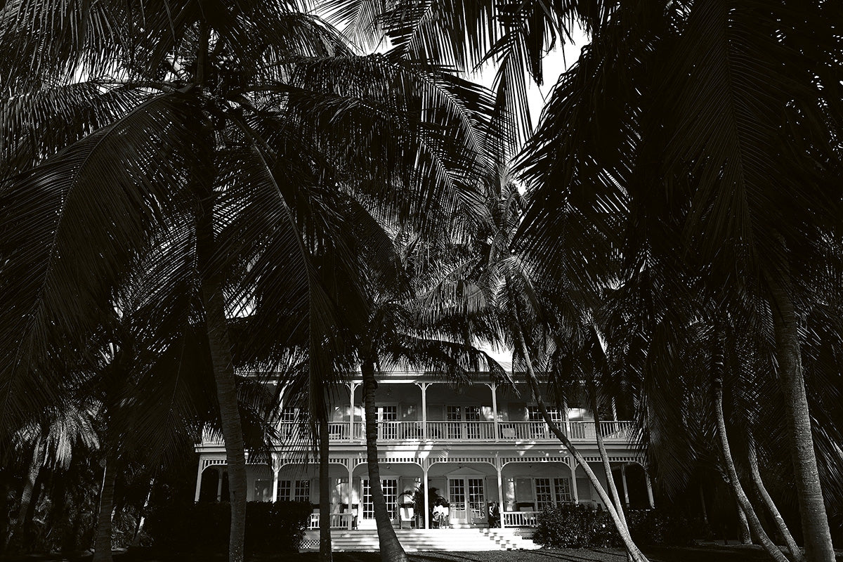 House amongst the palm trees