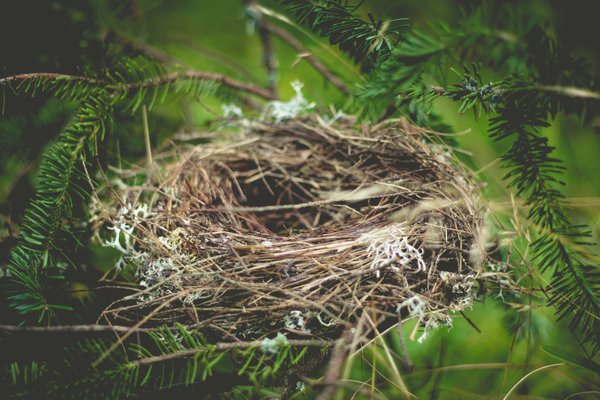 "The ""Empty Nest"" Update - How to Adapt When the Kids Leave for College"