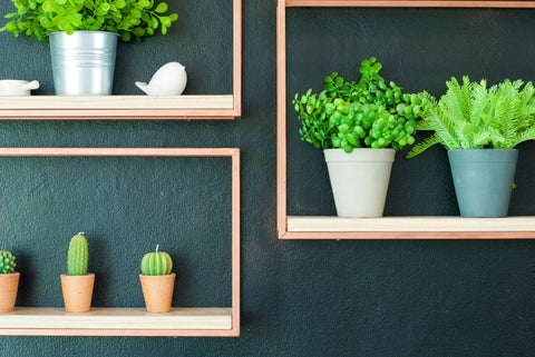 A Guide to Artificial Succulents