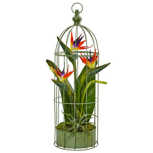 Birds of Paradise in Bird Cage