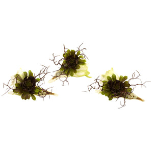 Wispy Succulent w/Seashell (Set of 3)
