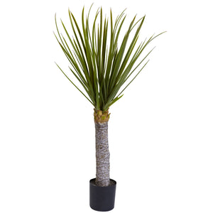 3' Yucca Tree with 699 Leaves