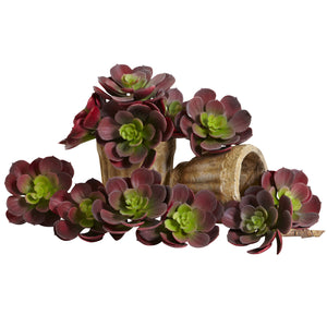 Echeveria Succulent (Set Of 12) Burgundy