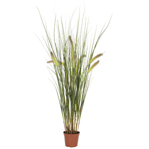 2.5' Grass Plant - Home Staging Warehouse