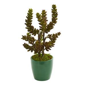 Succulent Artificial Plant in Green Pot (Set of 2)
